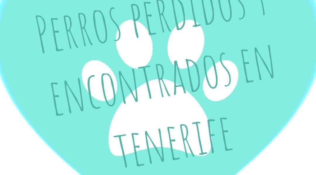 Perros o gatos perdidos en Tenerife